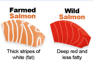 Difference Between Farm / Wild Salmon