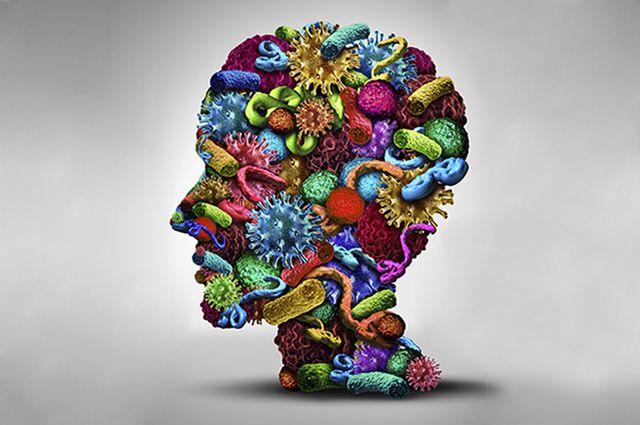 brain gut microbes